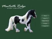 Monteith Ridge Gypsy Cob Stud